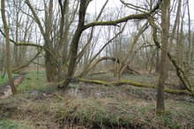 Mangrovenwald in Erlangen
