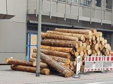 Holz vor der Nägelsbachstr. 26